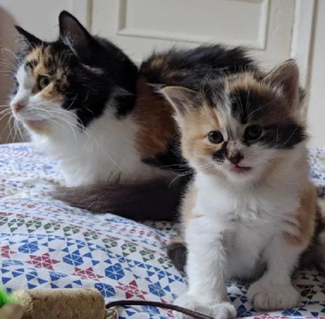 Трехцветные кошка и котенок