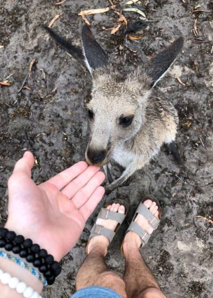кенгуру с человеком