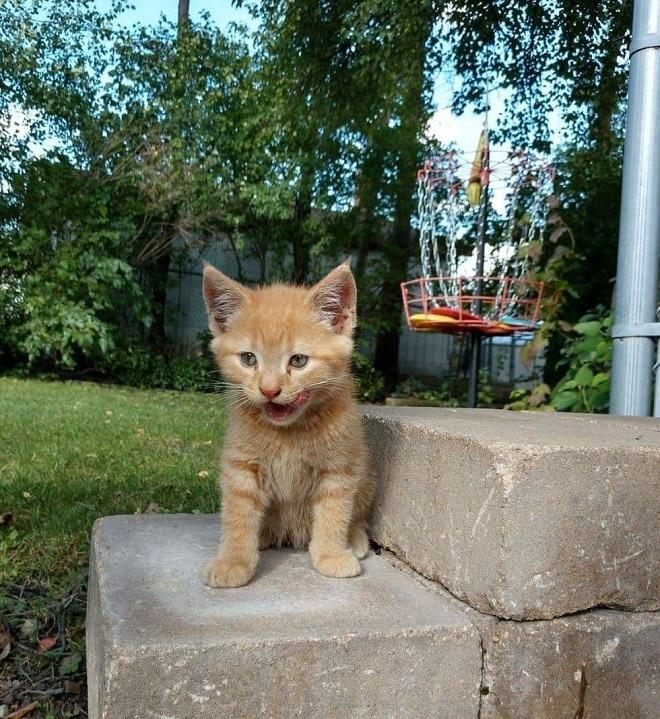 Котенок на стуренях