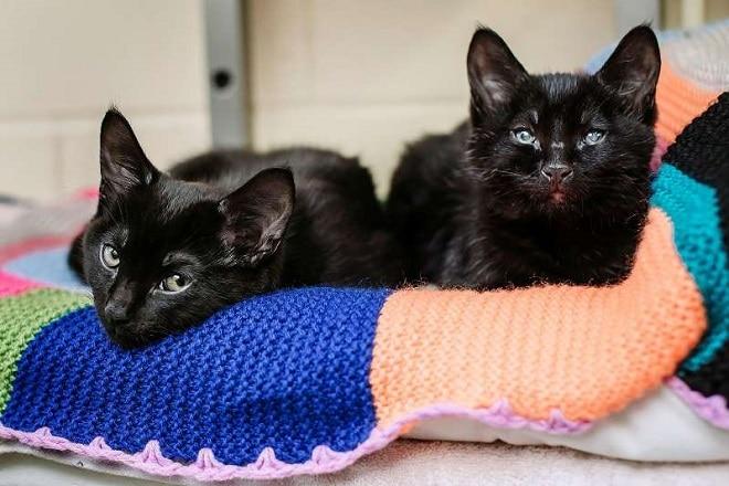 Лежачие котята