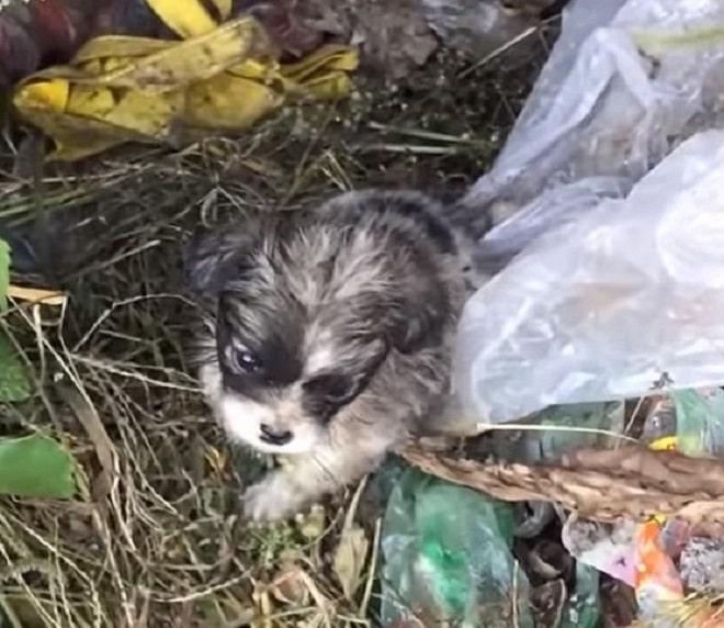 Грязный щенок