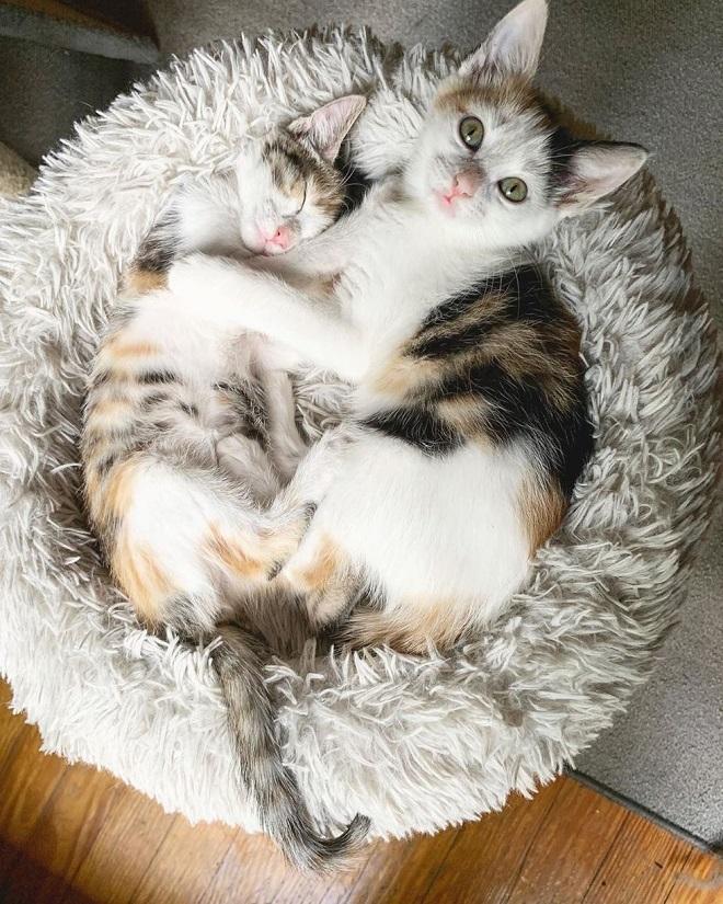 Котята обнимаются