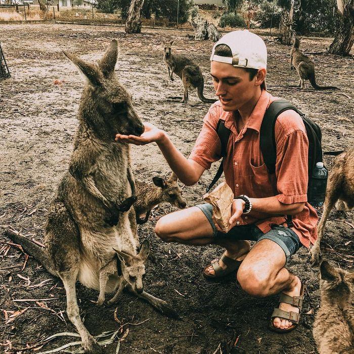 парень и кенгуру