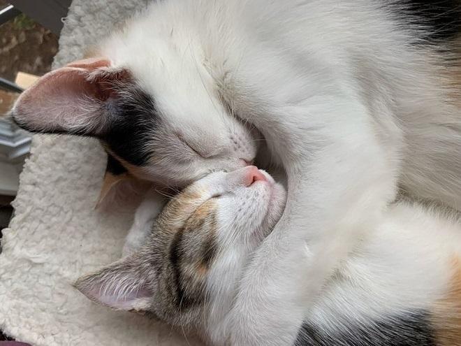 Котята в объятиях