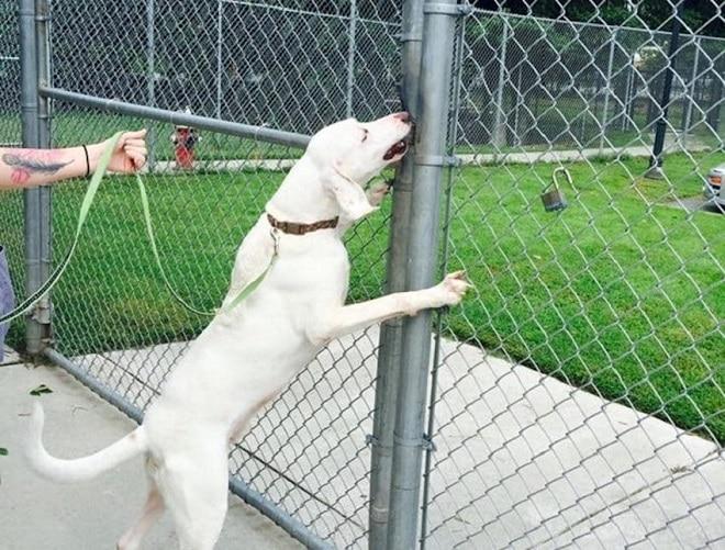 Пес на поводке