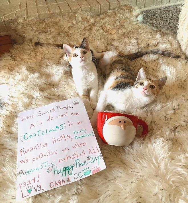 Кошечки и письмо