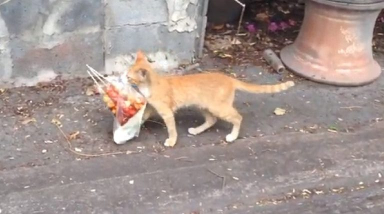 cat and meat