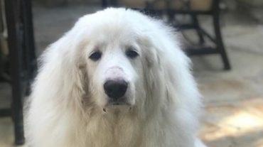 gorgeous dog