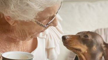 lovely pet and Nan