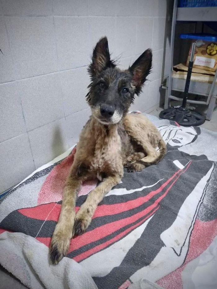 спасённая собака