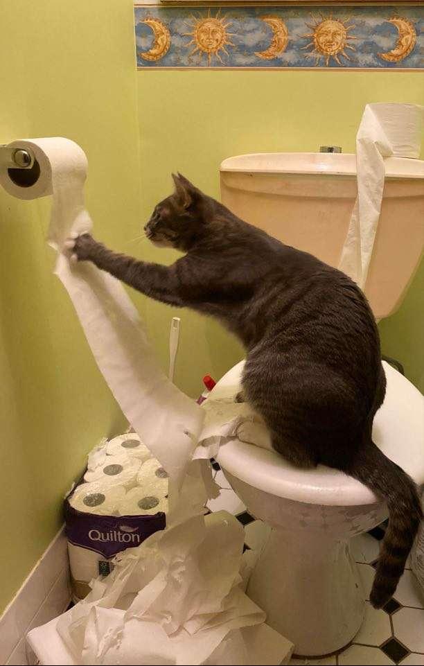 кошка с туалетной бумагой