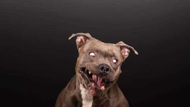 собака на фото