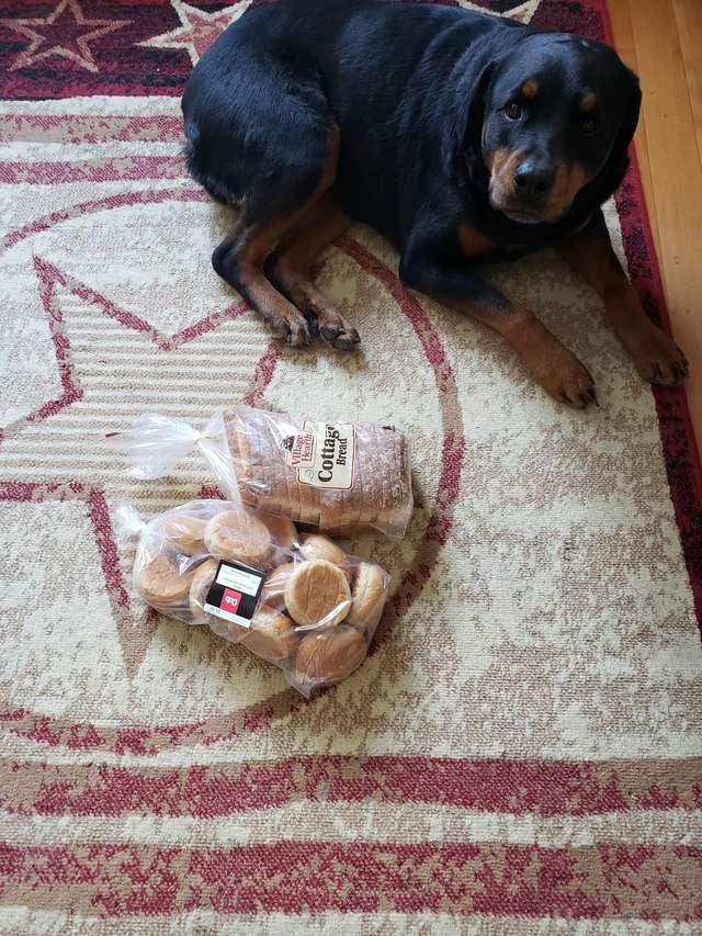собака с хлебом
