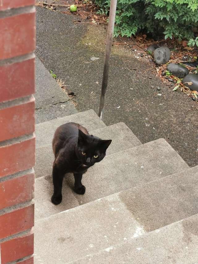 кот на ступеньках