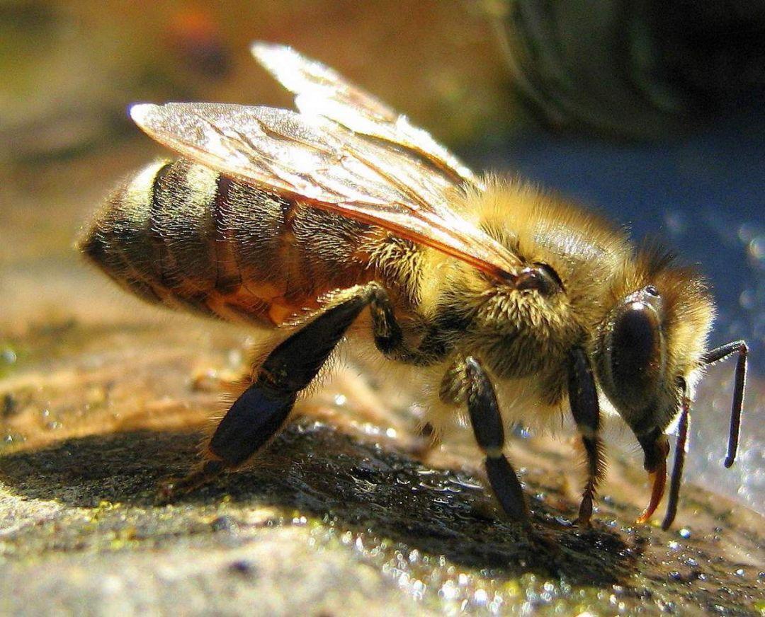 древние пчелы фото цветов