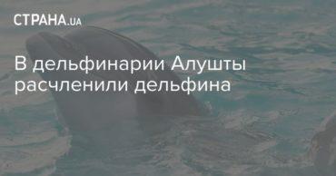 196176_14725.jpg