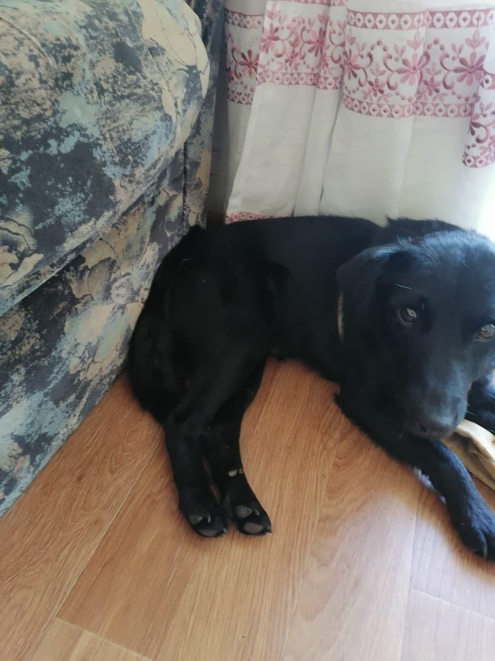 чёрный пёс