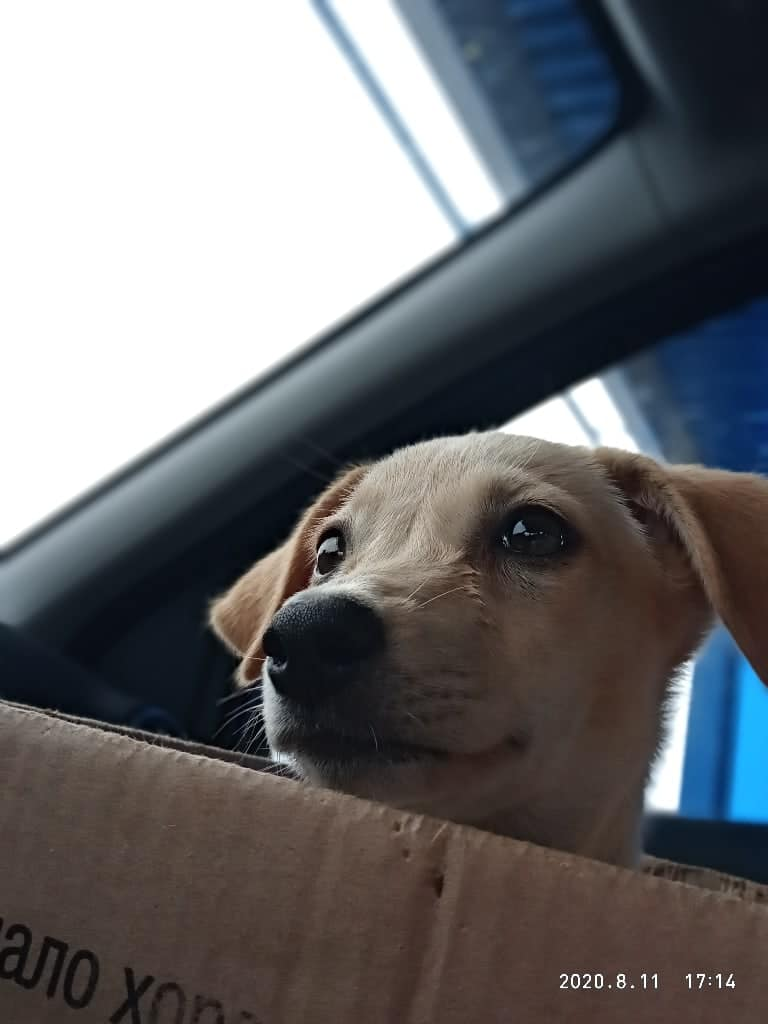 щенок в коробке