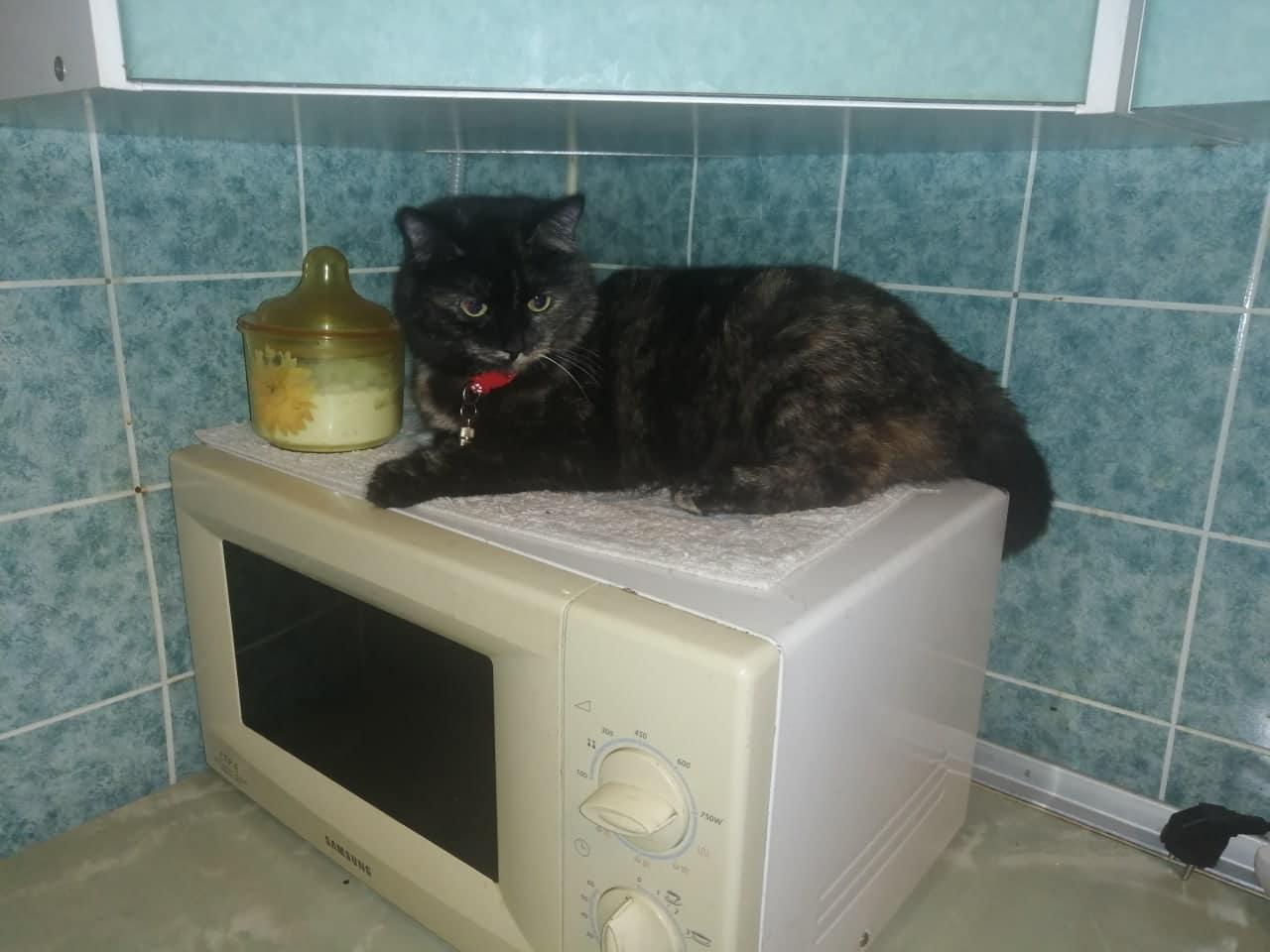 кошка на кухне