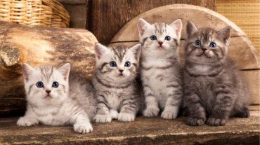 продажа котов