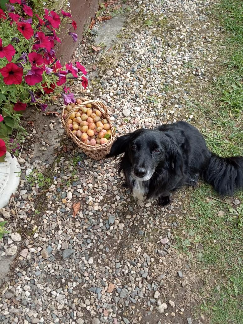 собака в огороде