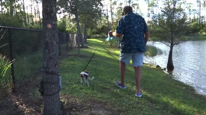 В США пожилой мужчина спас щенка из пасти аллигатора и стал звездой Сети (ВИДЕО)