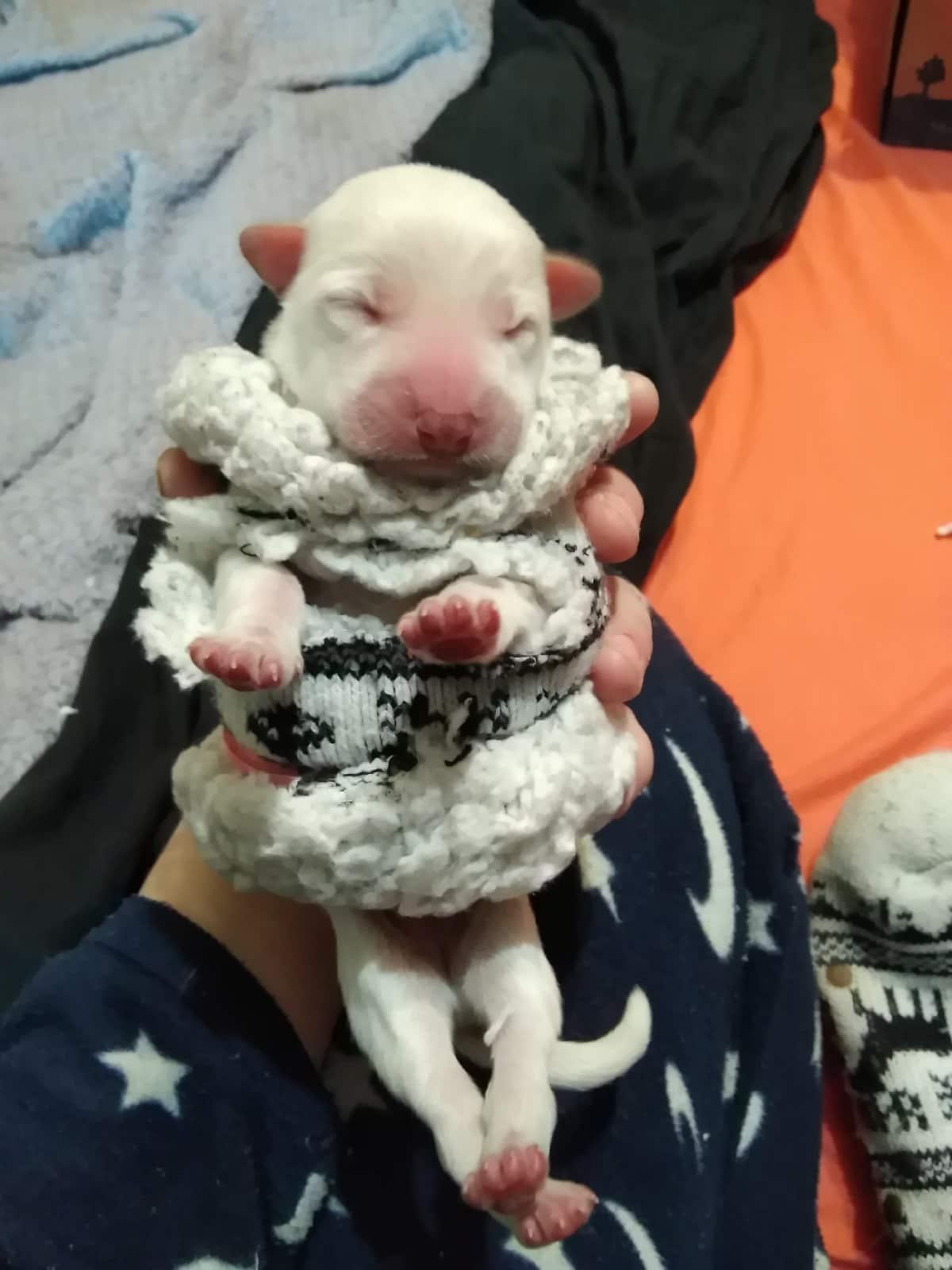 щенок в руках