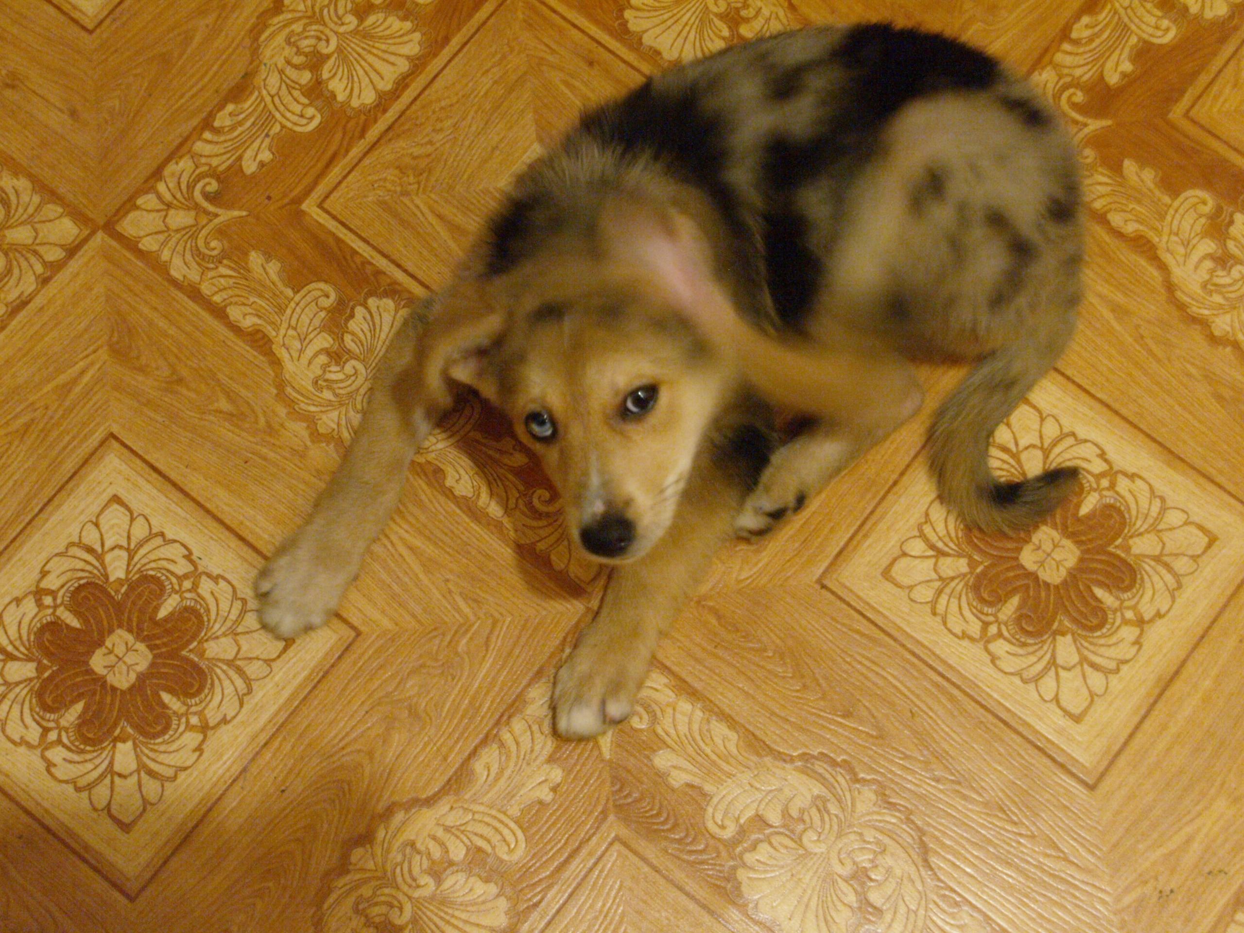 щенок в квартире