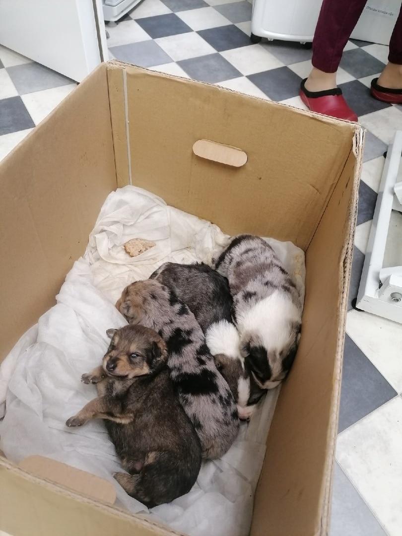 щенки в коробке