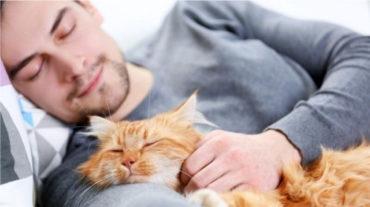 кошка для дома