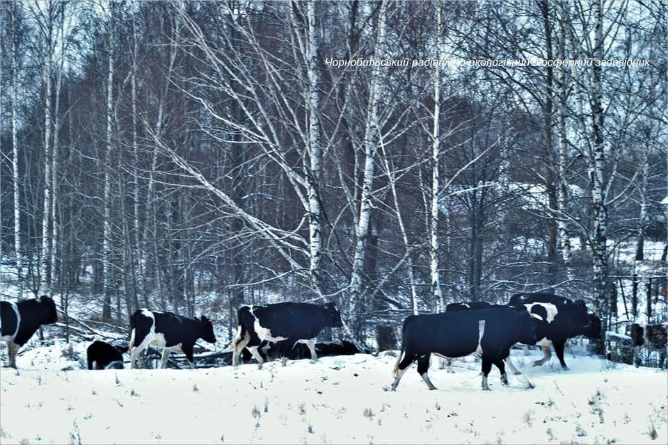 ©Чорнобильський Радіаційно-екологічний Біосферний Заповідник, Facebook