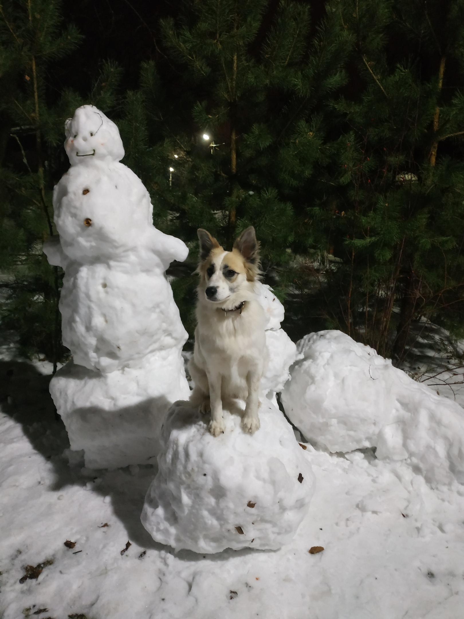 собака и снеговик