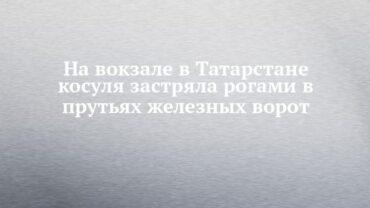 251799_70926.jpg